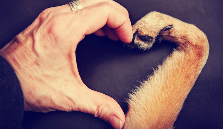 Cardiologie - Service aux animaux de compagnie - Hôpital vétérinaire de Sherbrooke