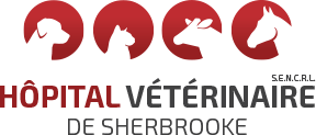 Hôpital Vétérinaire de Sherbrooke