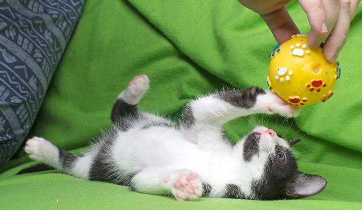 Pension - Service aux animaux de compagnie - Hôpital vétérinaire de Sherbrooke