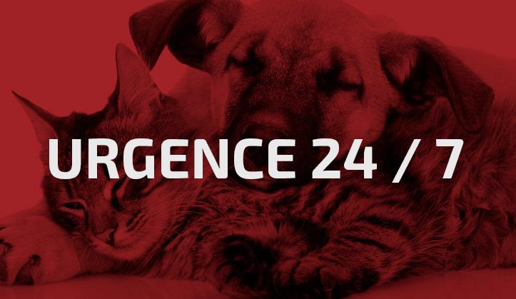 Urgence - Service aux animaux de compagnie - Hôpital vétérinaire de Sherbrooke