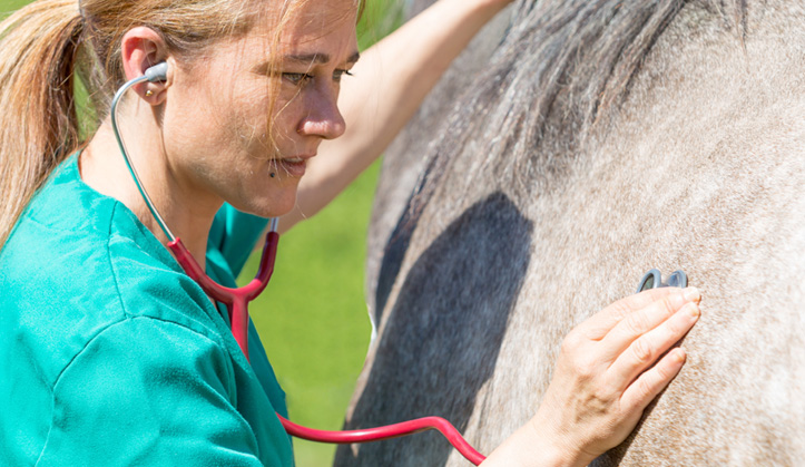 Examen pré-achat - Service aux animaux de la ferme & équins - Hôpital vétérinaire de Sherbrooke