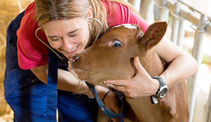 Médecine préventive - Service aux animaux de la ferme & équins - Hôpital vétérinaire de Sherbrooke