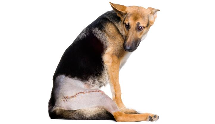 Chirurgie - Service aux animaux de compagnie - Hôpital vétérinaire de Sherbrooke