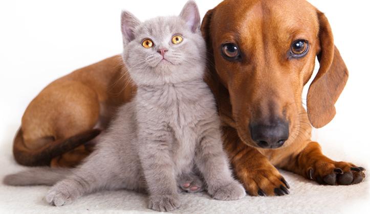 Médecine interne - Service aux animaux de compagnie - Hôpital vétérinaire de Sherbrooke