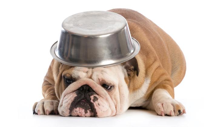 Nutrition - Service aux animaux de compagnie - Hôpital vétérinaire de Sherbrooke