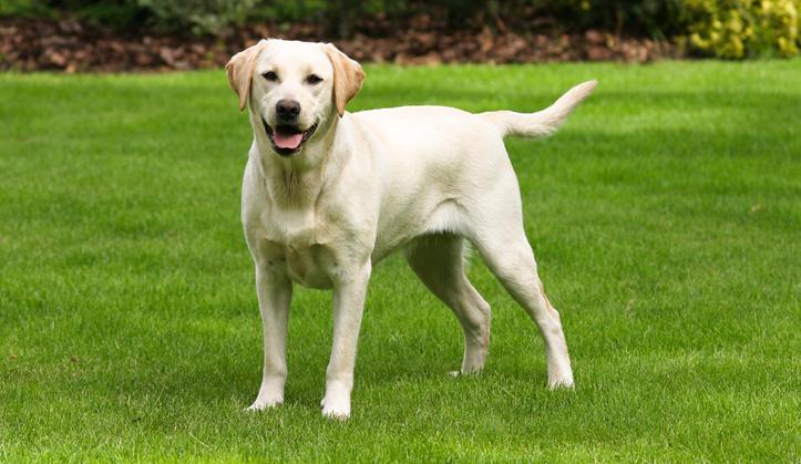 Examen de santé - Service aux animaux de compagnie - Hôpital vétérinaire de Sherbrooke