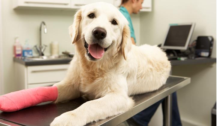 Hospitalisation - Service aux animaux de compagnie - Hôpital vétérinaire de Sherbrooke