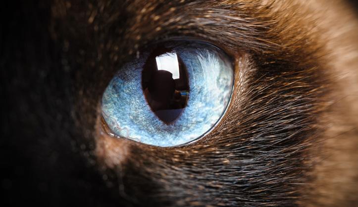 Ophtalmologie - Service aux animaux de compagnie - Hôpital vétérinaire de Sherbrooke