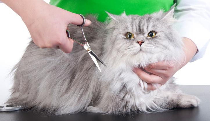 Toilettage - Service aux animaux de compagnie - Hôpital vétérinaire de Sherbrooke