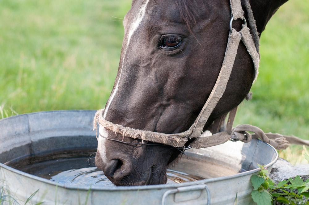 cheval_soif_hvsherbrooke