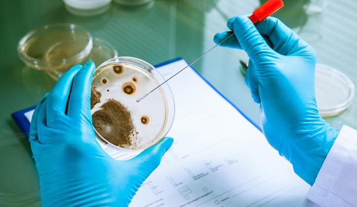 Bactériologies de lait  - Service aux animaux de la ferme & équins - Hôpital vétérinaire de Sherbrooke