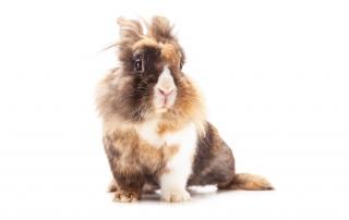 HV-Sherbrooke-blogue-adopter-lapin-furet-03