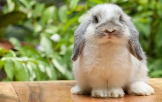 HV-Sherbrooke-blogue-adopter-lapin-furet-05