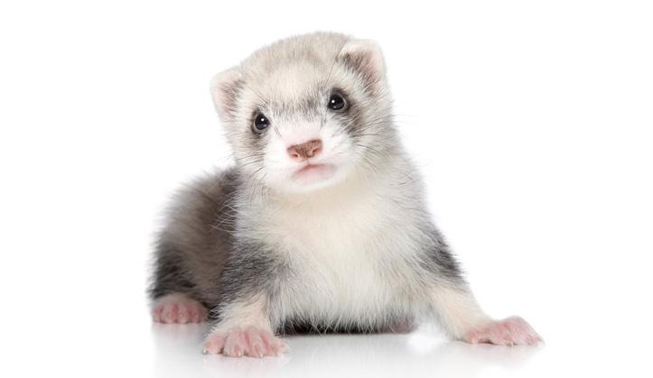 Médecine des animaux exotiques - Service aux animaux de compagnie - Hôpital vétérinaire de Sherbrooke